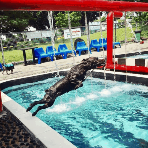 5 Dog Swimming Pools In Singapore To Beat The Hot Weather