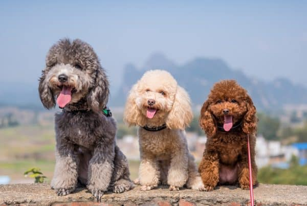 Pet Boarding Centres in Singapore