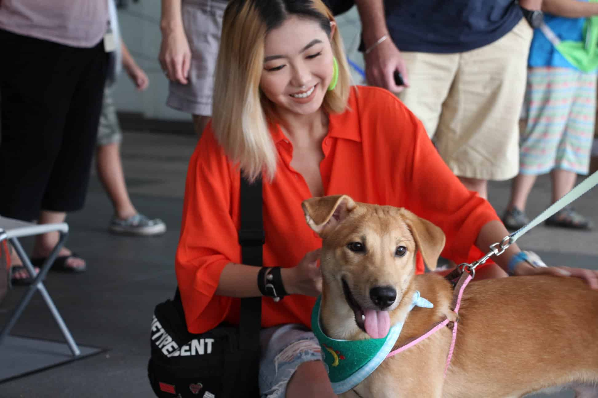 Dog Adoption Centre - Action for Singapore