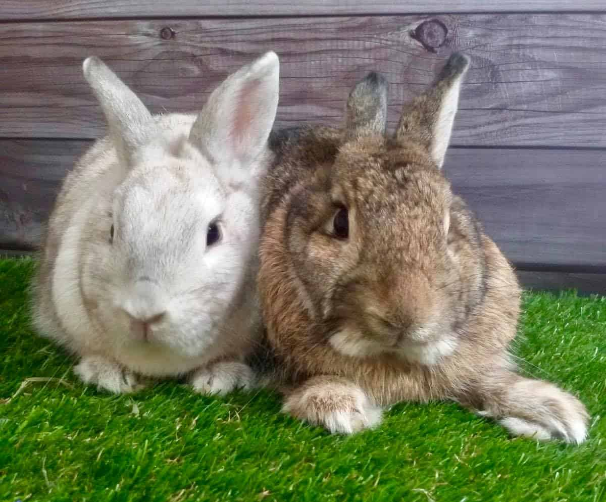 Rabbit Adoption Centre - Bunny Wonderland