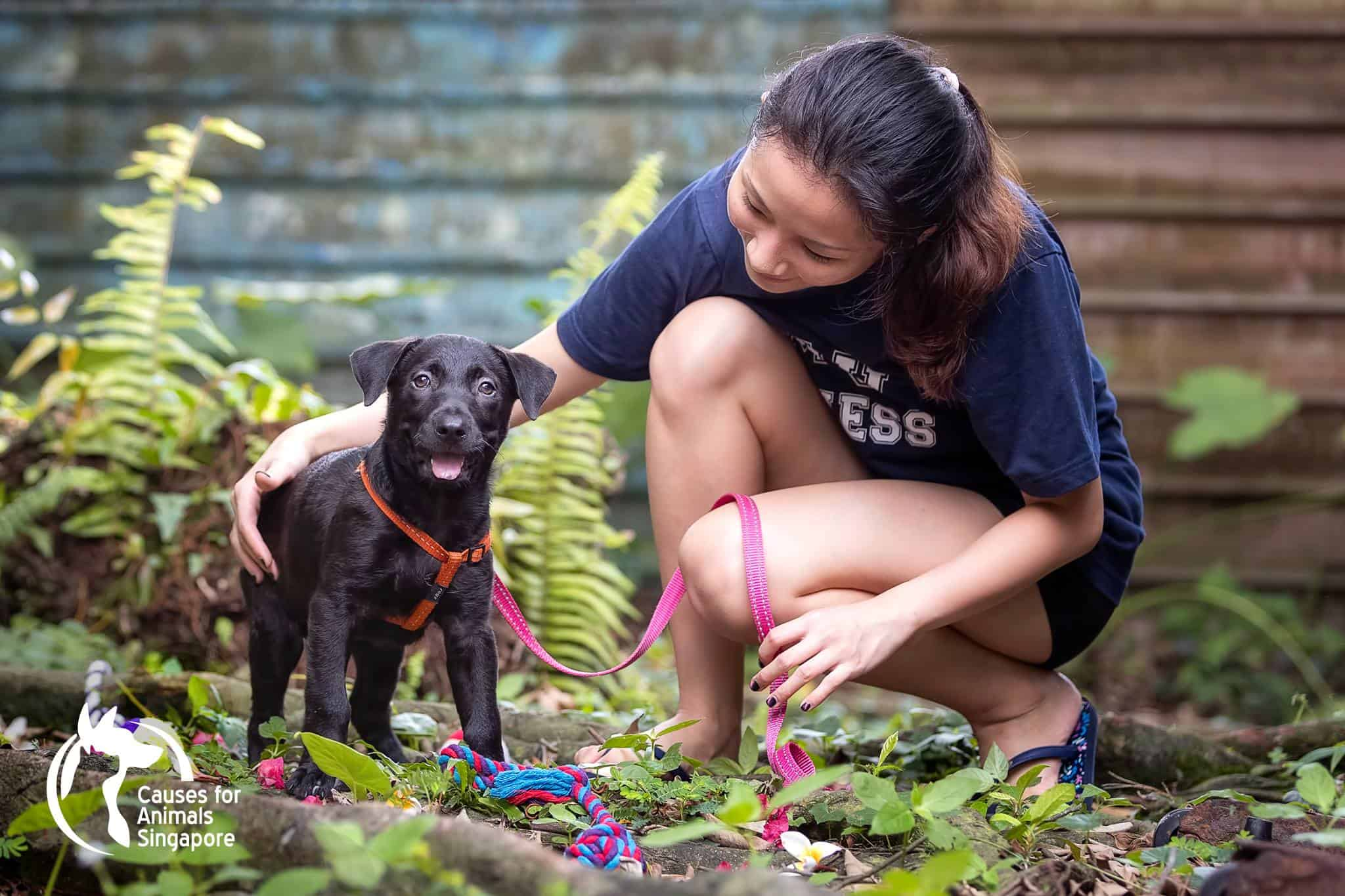 Dog and Cat Adoption Centre - Causes for Animals Singapore