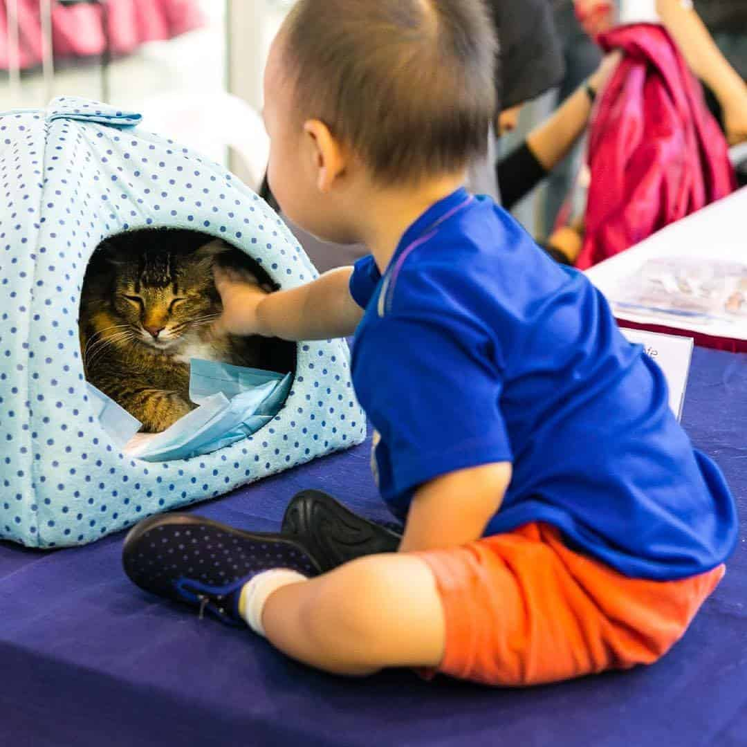 Cat Adoption Centre - Love Kuching Project
