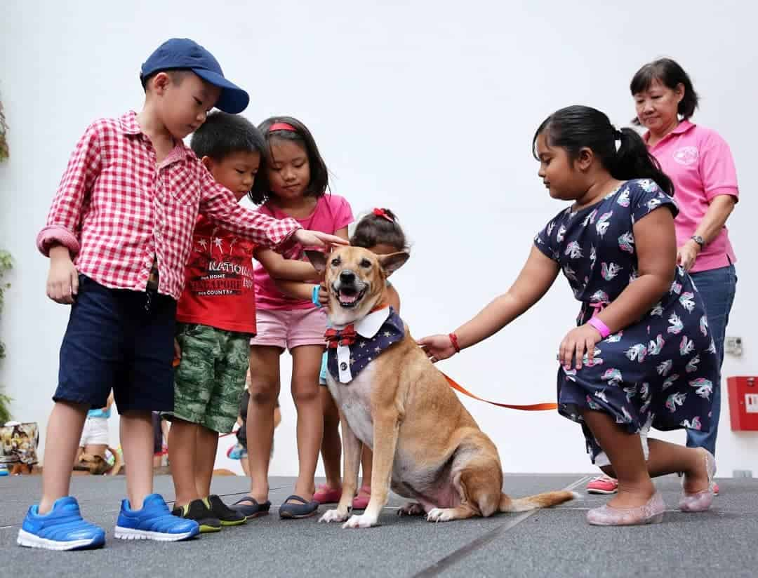 Dog Adoption Centre - MercyLight Adoption Singapore