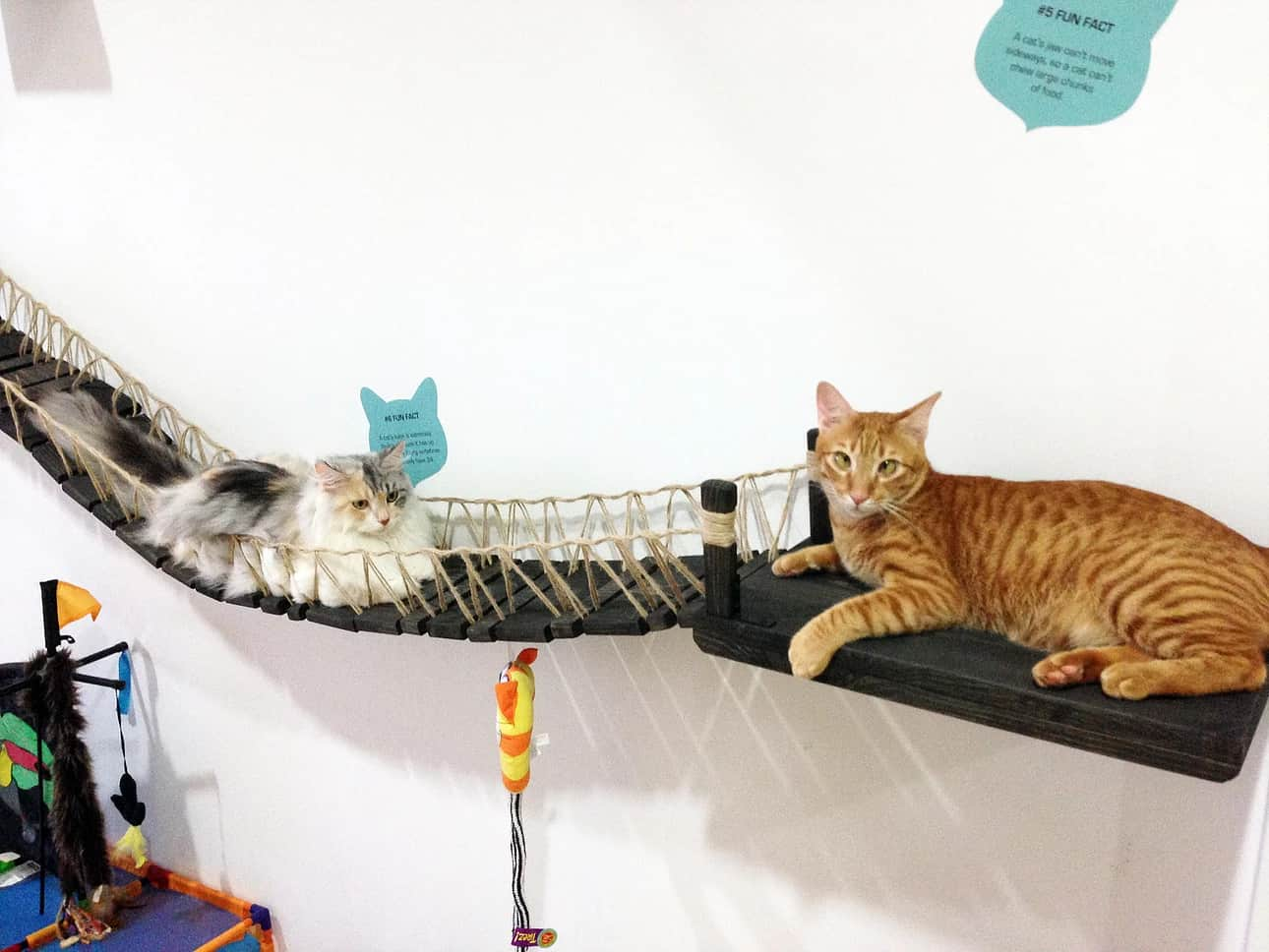 Cat Adoption Centre - The Cat Museum