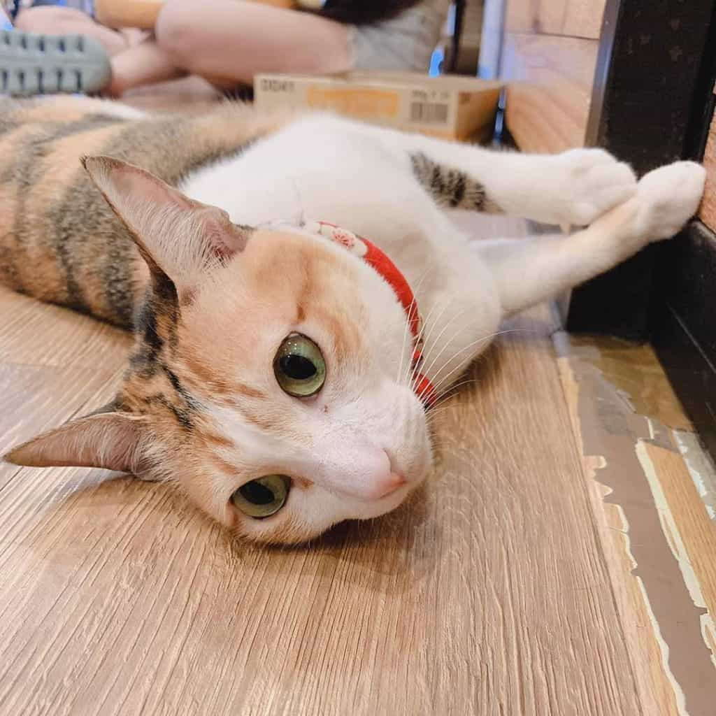 The Cat Cafe Singapore - Kelly
