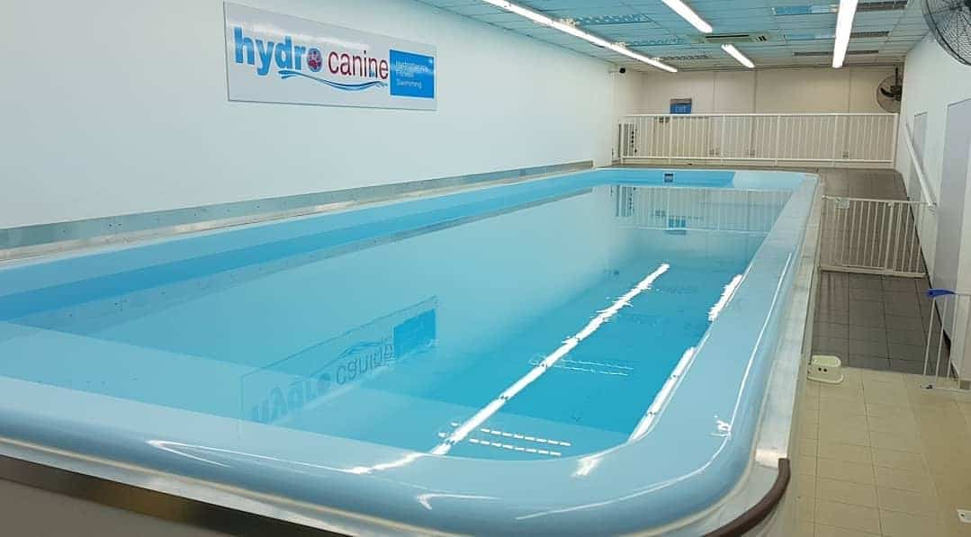 Long indoor swimming pool for dogs
