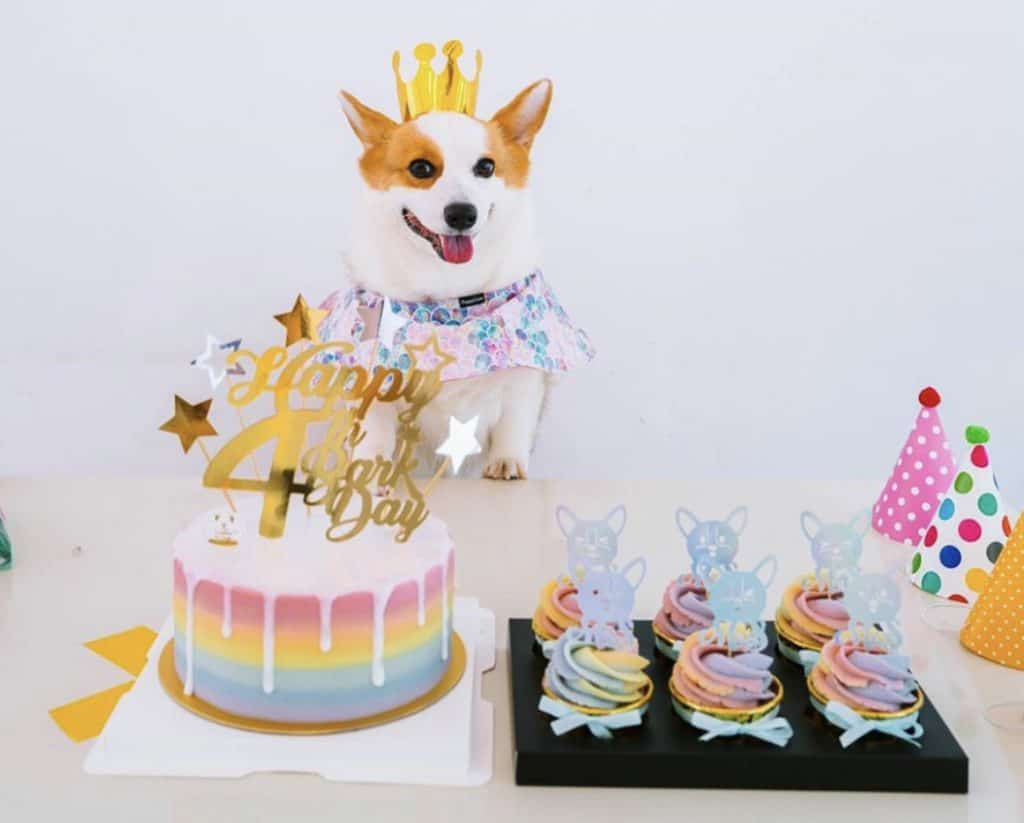 Isa Pets and Bakes rainbow birthday cake and pupcakes