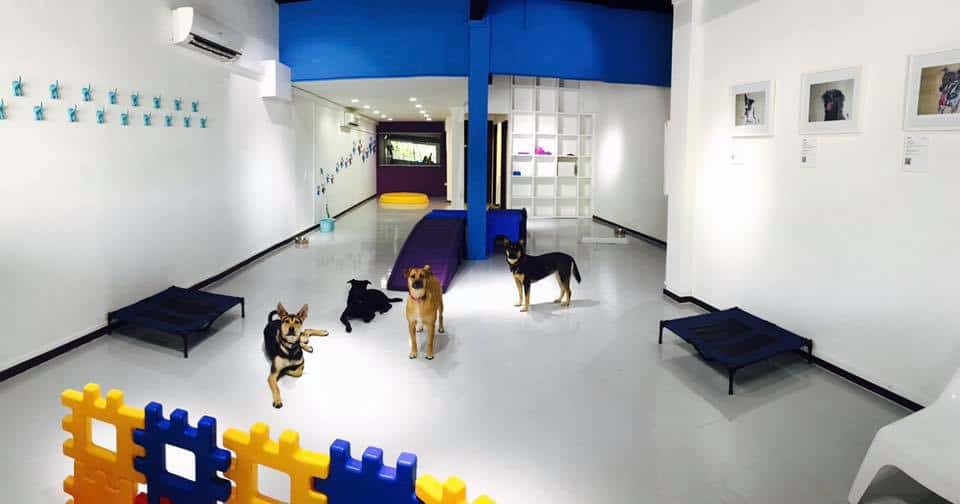 Dog Boarding Centre - Doggies Galore Singapore