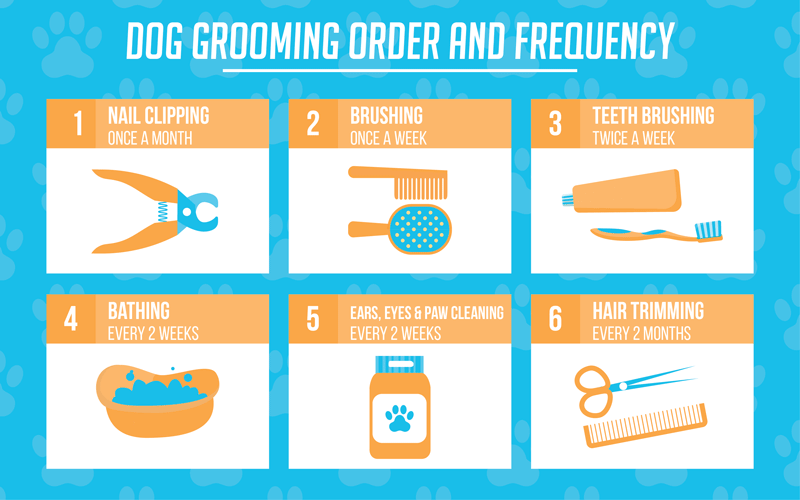 Dog Grooming Guide - Order and Frequency