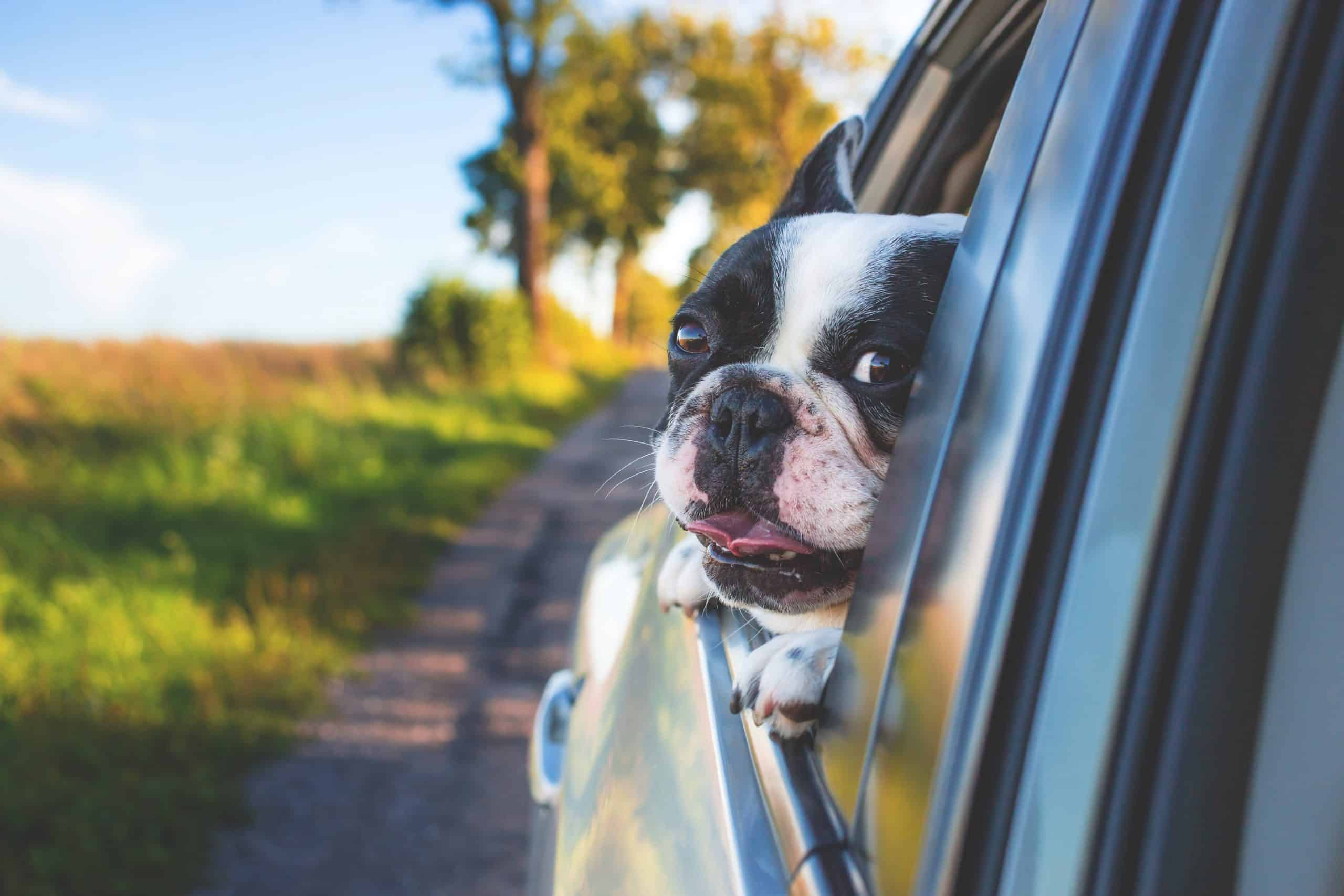 9 Pet Taxi Services to Make Travelling with Your Pet a Breeze
