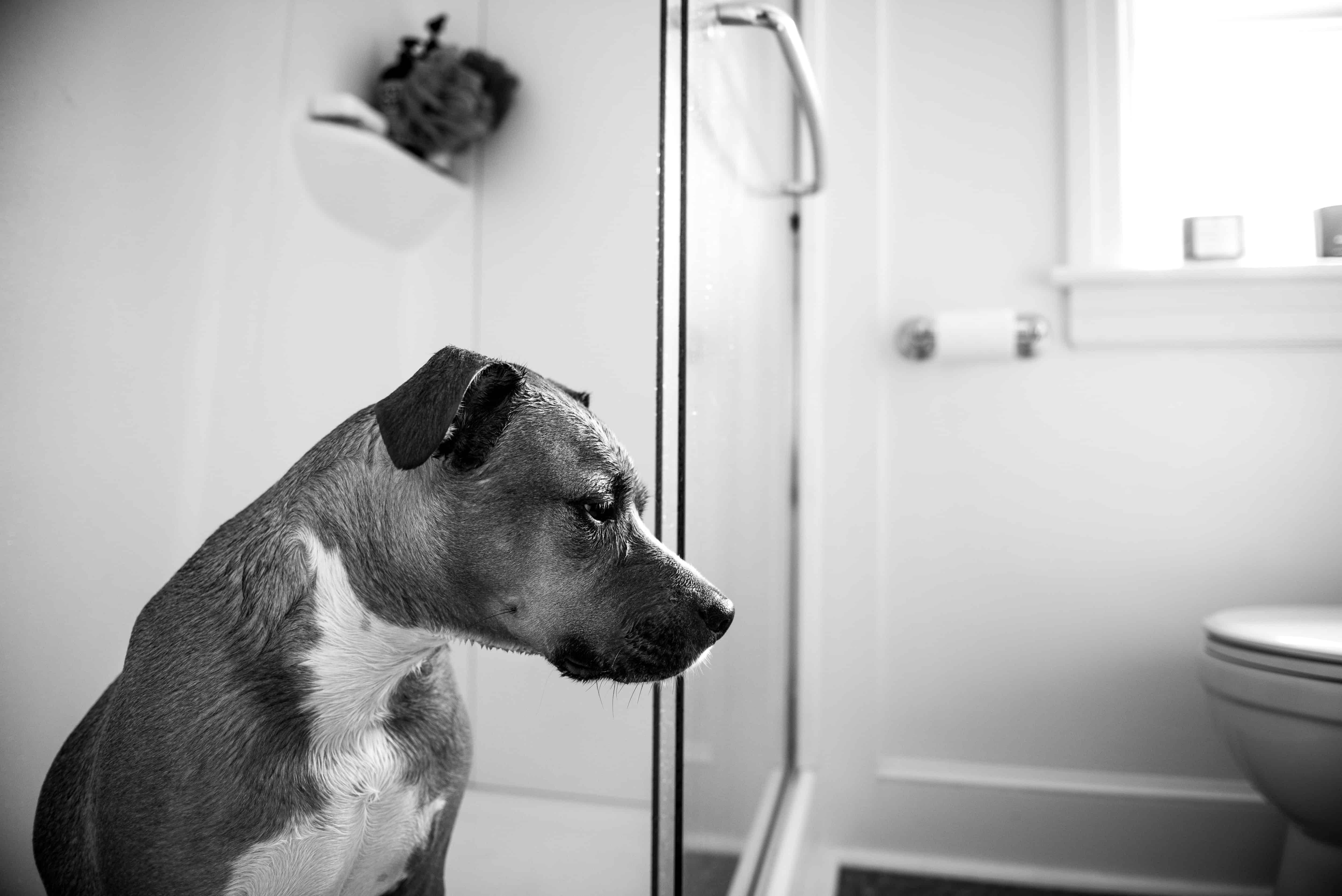 7 Useful Tips To Toilet Train Your Dog