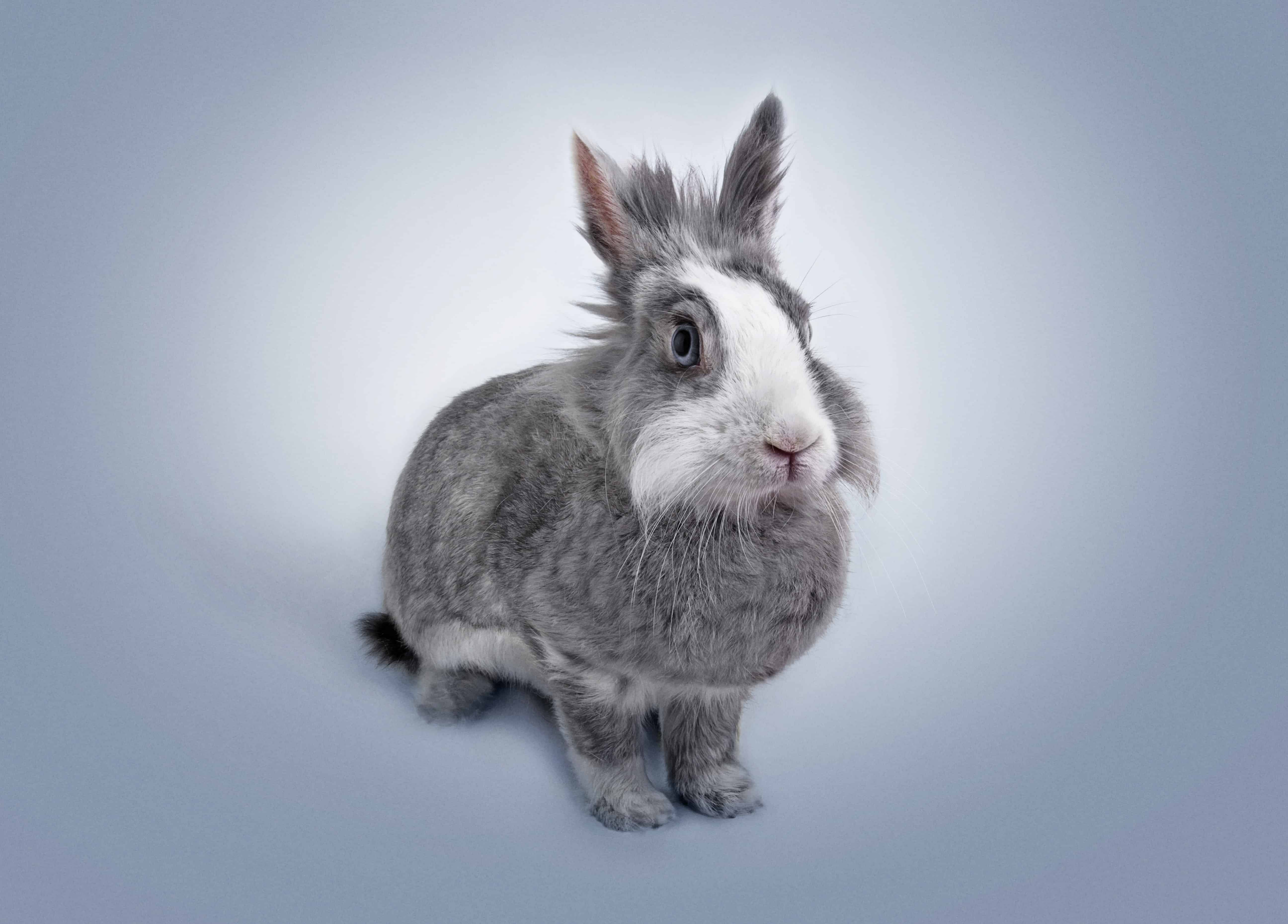 4 Places In Singapore To Adopt A Rabbit