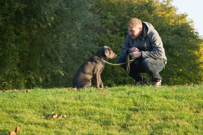 Man squatting and talking to dog