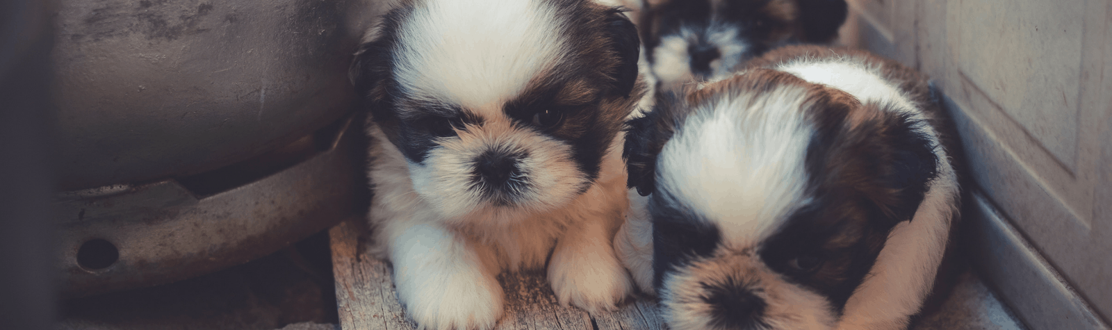 Things You Should Know As A First Time Dog Owner