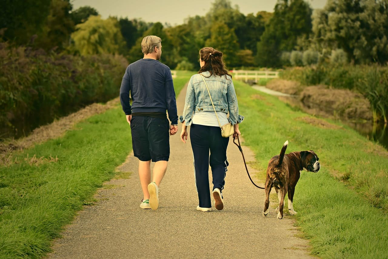 How a Healthy Pet Can Help Your Health Too