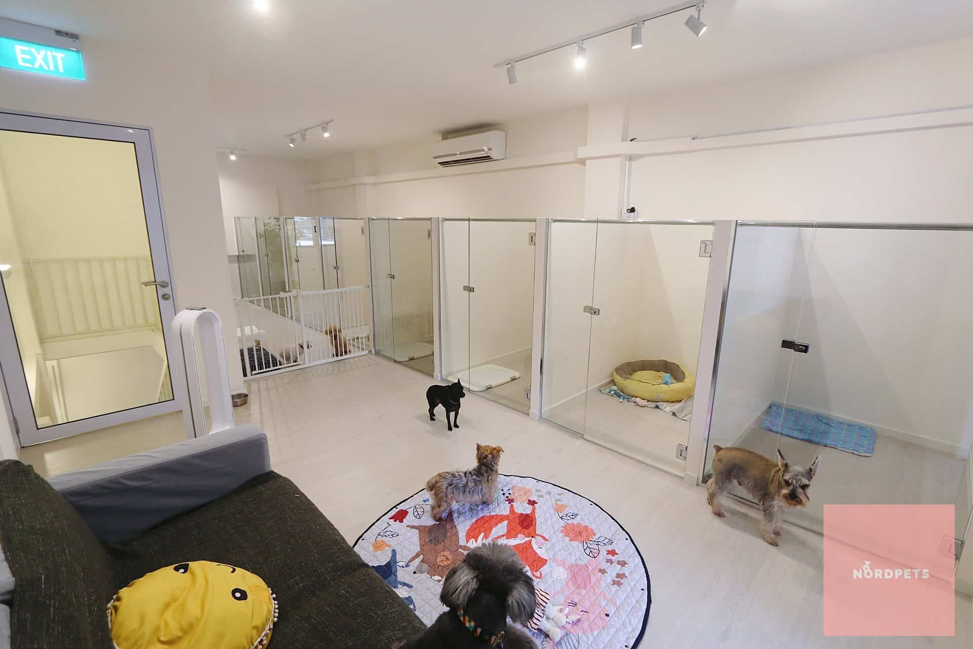 Dog Boarding Centre Singapore - Nord Pets