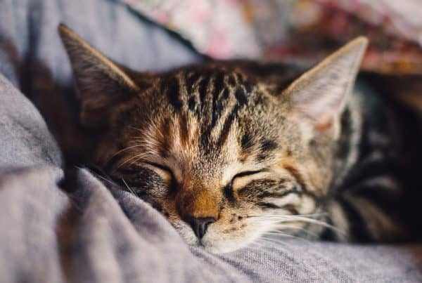 Everything You Need to Know About Cat Fleas + Tips on How to Treat Them