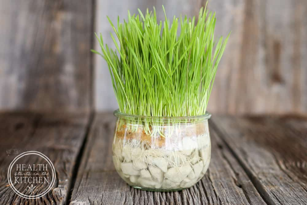 How To Grow Cat Grass Without Soil