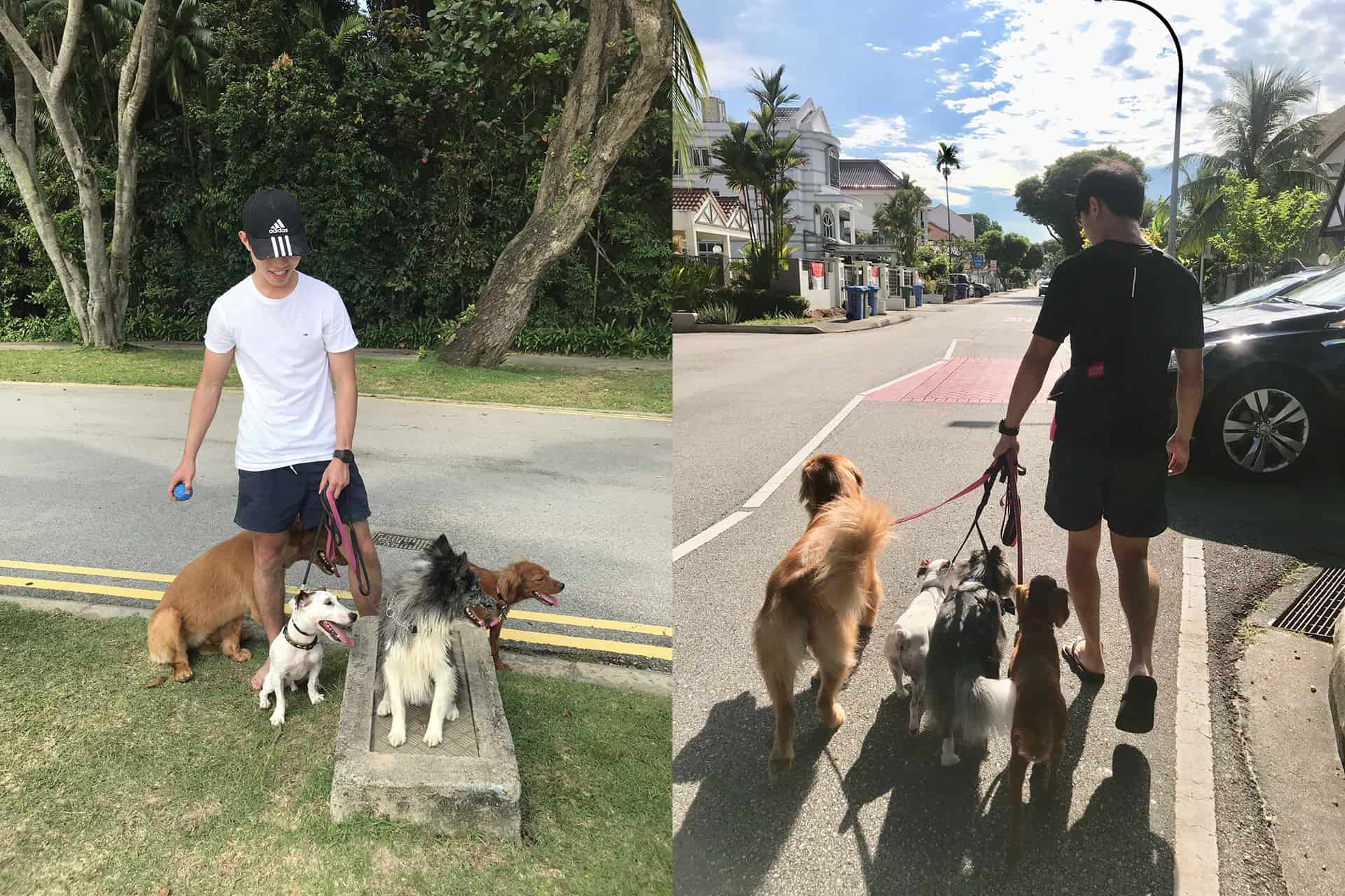 Dog Walking Tips from Professional Dog Walker in Singapore