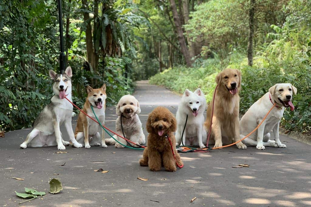 Dog Walking Tips - Dogs Posing for Photo