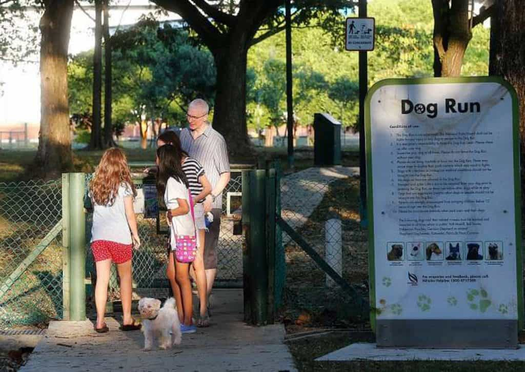 Things to Take Note When Visiting a Dog Run/Park