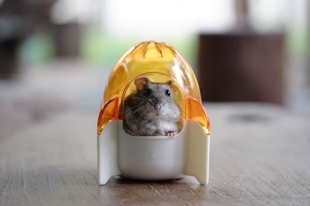 How to Bathe a Hamster Safely: 5 Effective Methods Every Owner Should Know [+ Step-by-step Instructions]