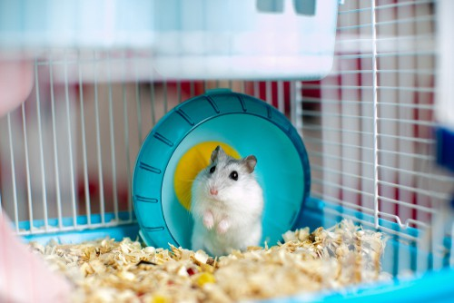 hamster in its cage