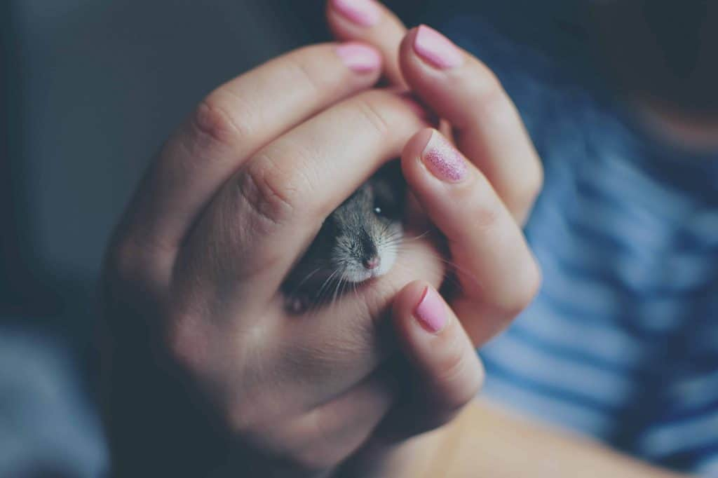 Types of Hamster Breeds and Their Personality Traits