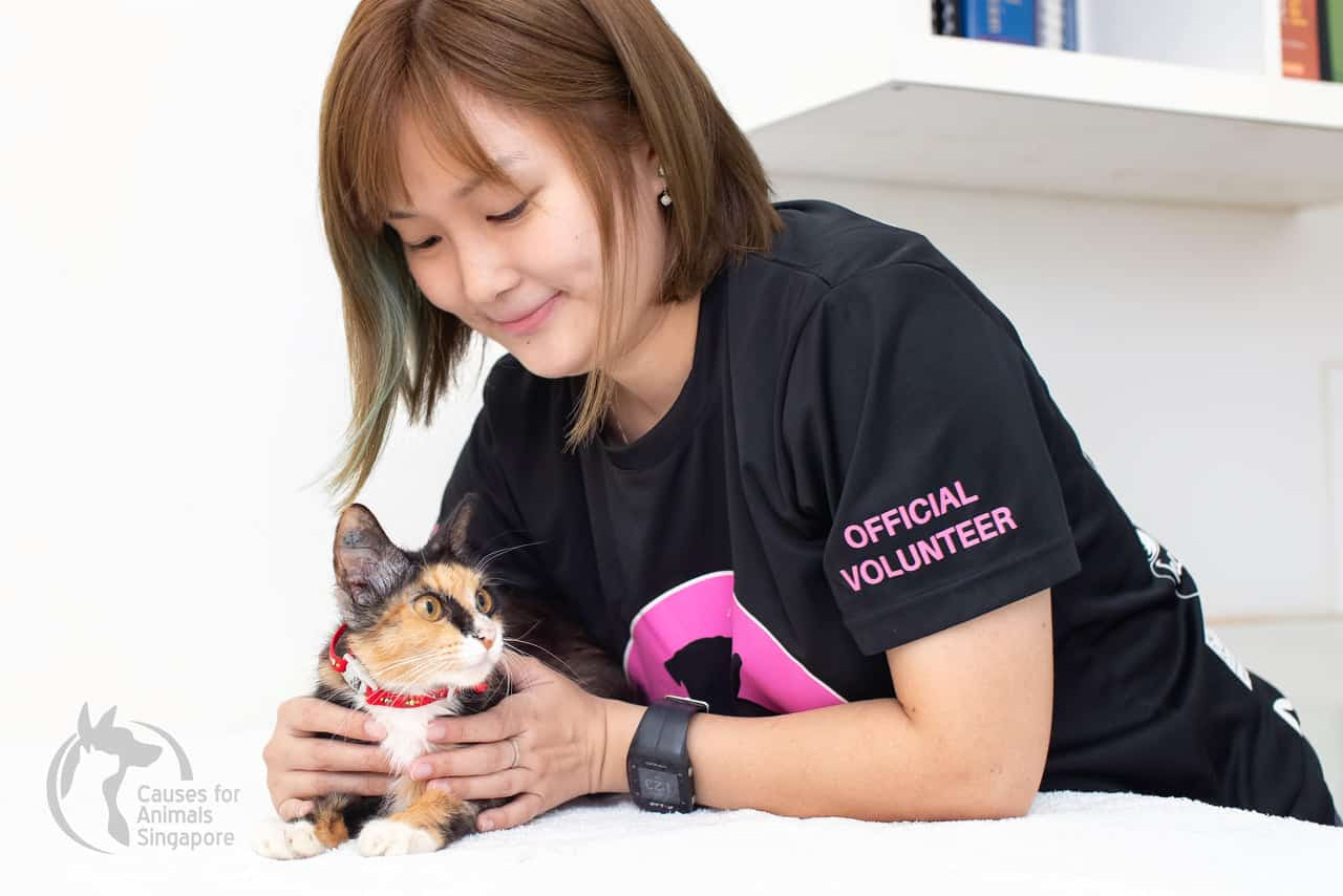 Volunteer from Causes for Animals Singapore caring for a rescue cat