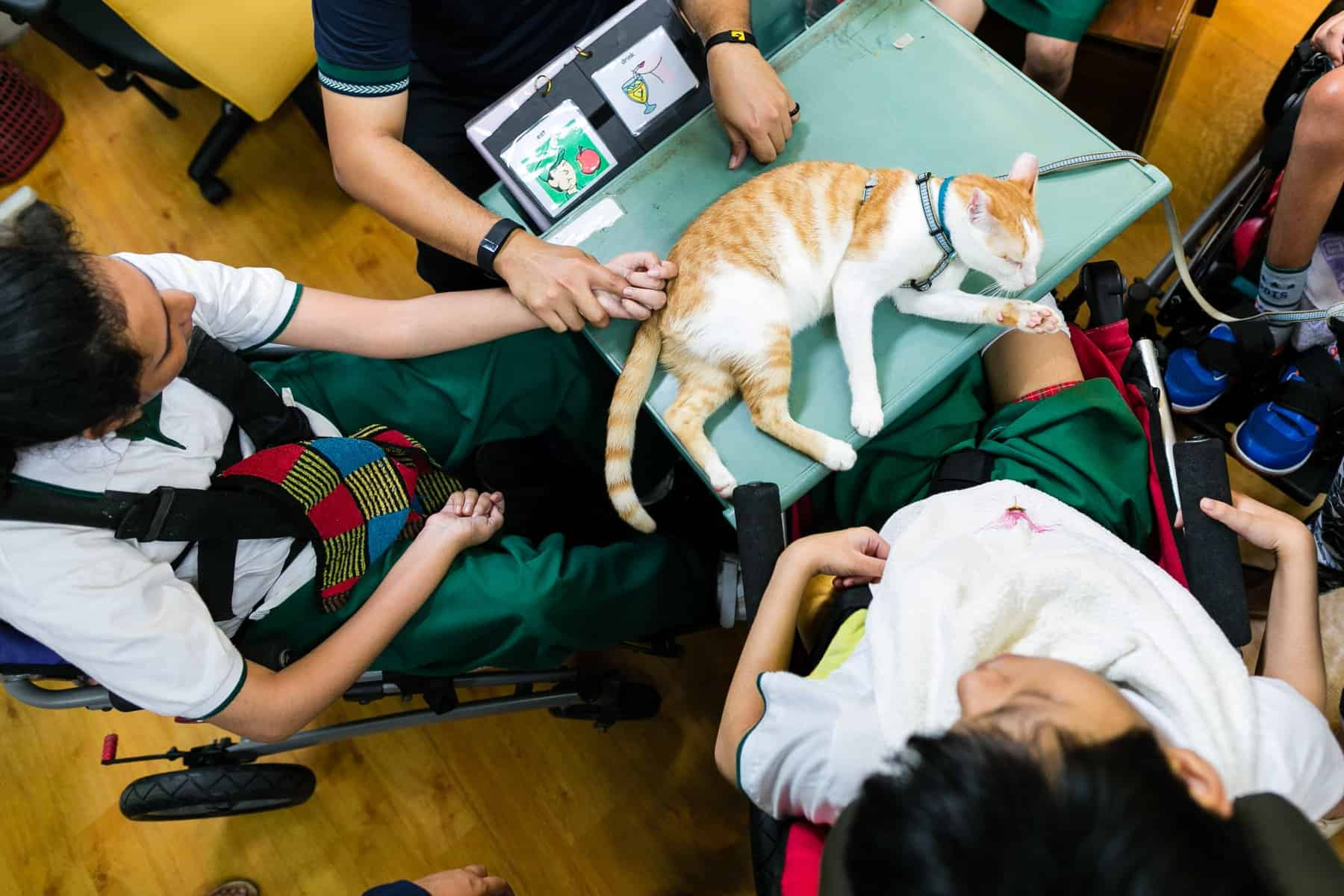 Students interacting with a rescue cat in school