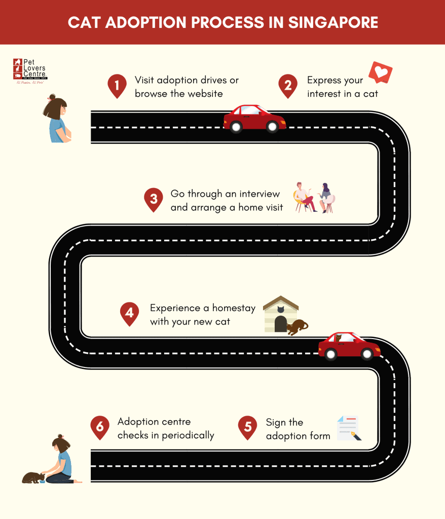 Infographic showing the cat adoption process in Singapore