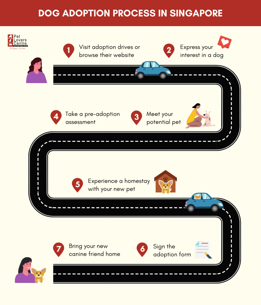 Infographic showing the dog adoption process in Singapore