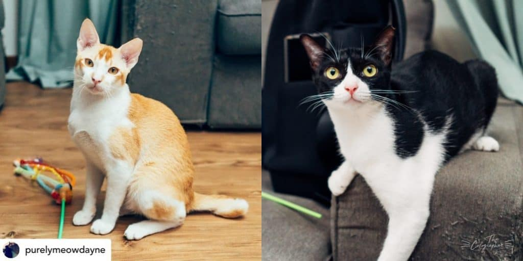 2 cats up for adoption at Purely Adoptions