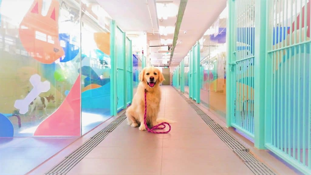 Dog standing in the middle of pet boarding cages at both sides