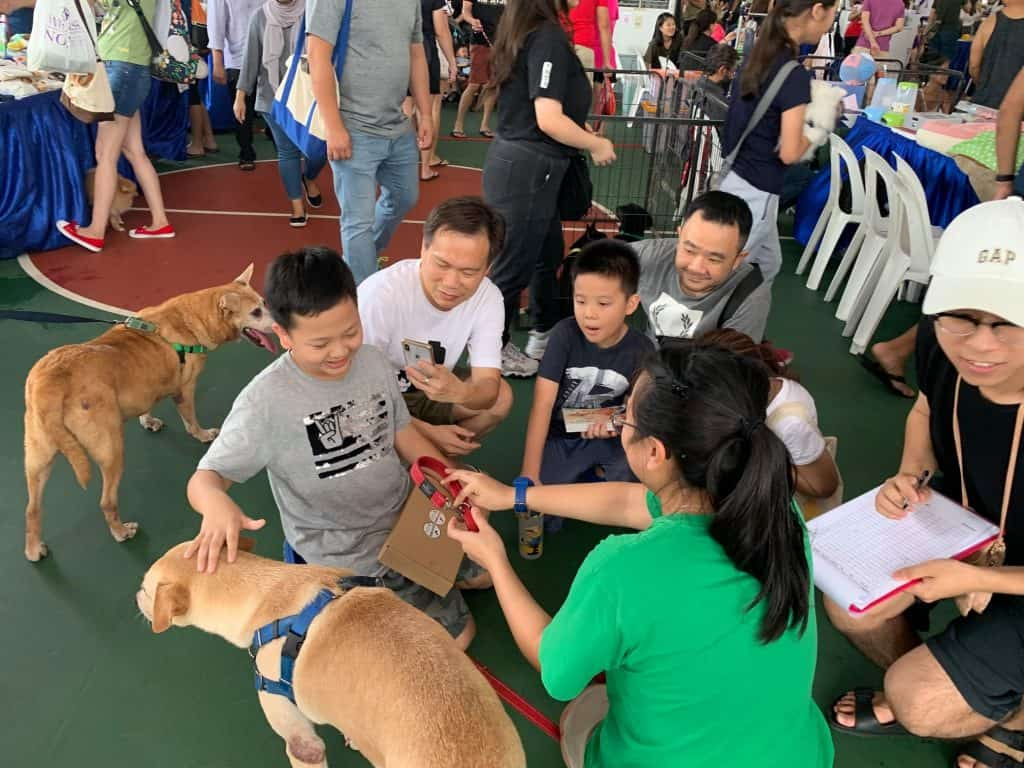 People gathering around dogs at an adoption drive