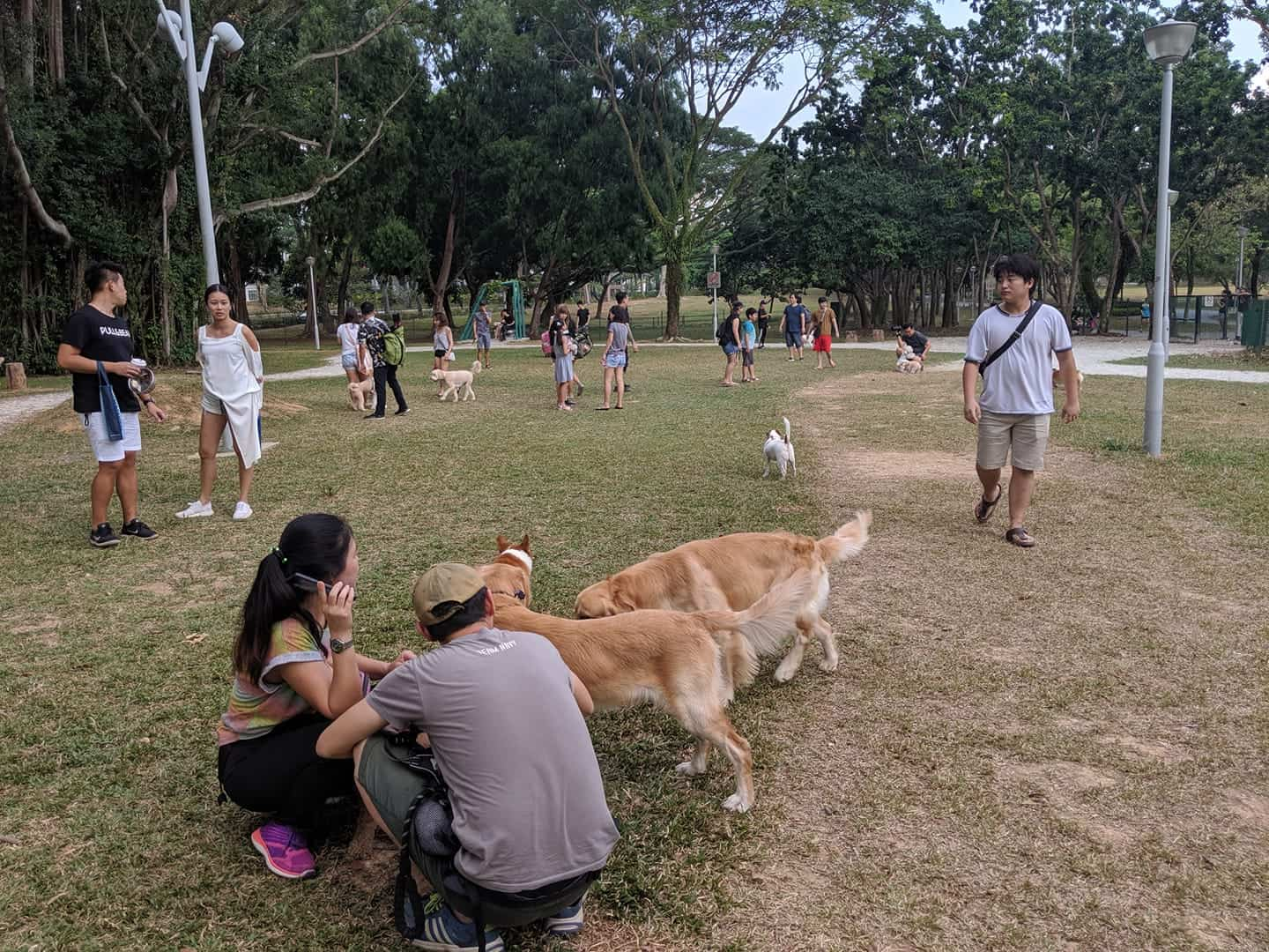 Dog owners interacting with their dogs at Bishan Dog Park
