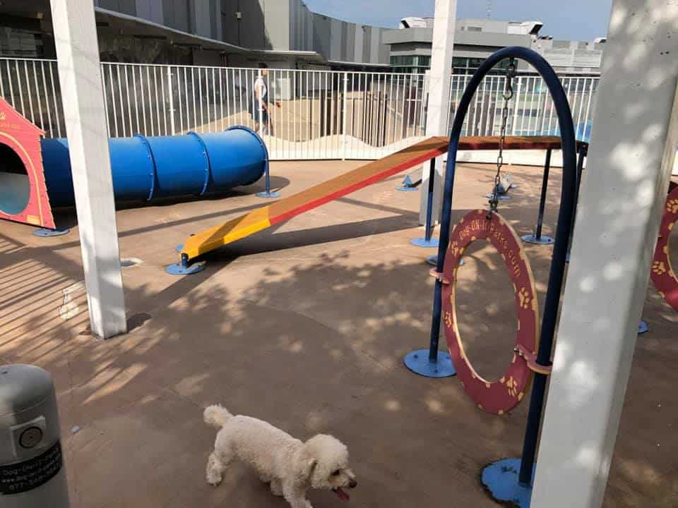 Dog exploring the obstacle course at K9 Park
