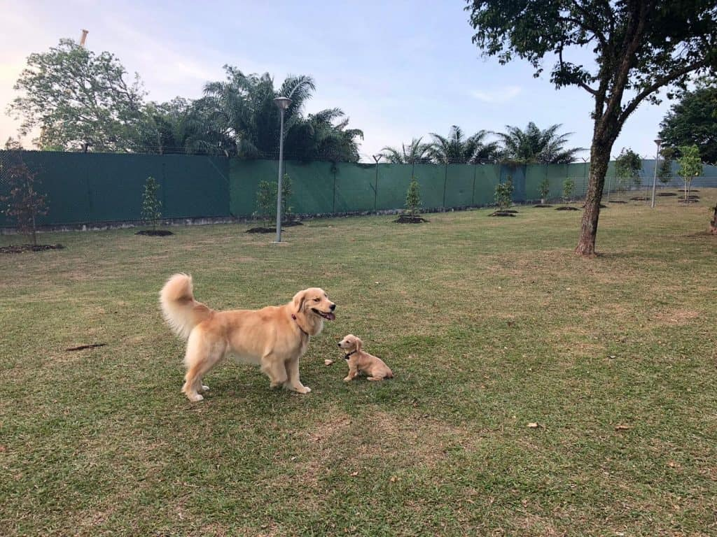 Dogs on a slope at Sembawang Dog Park