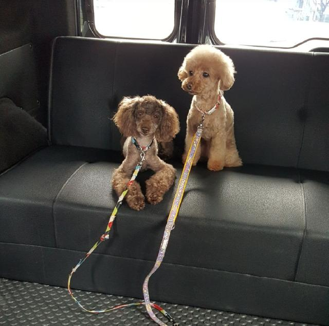 2 dogs on a leash sitting in a car