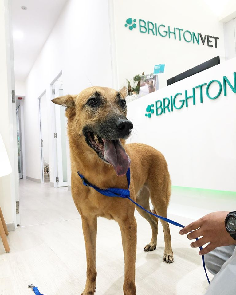 Street dog at Brighton Vet Care