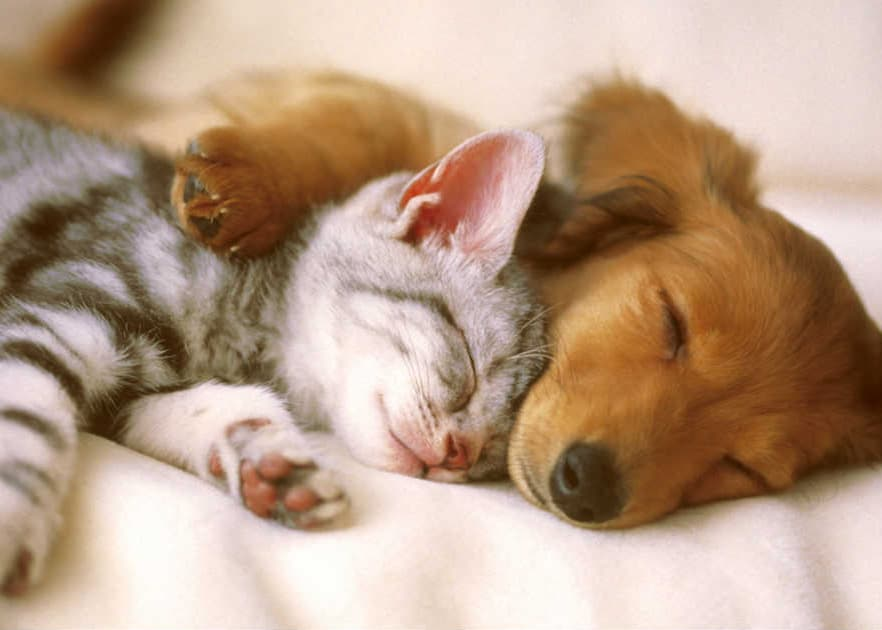 Dog and cat taking a nap together