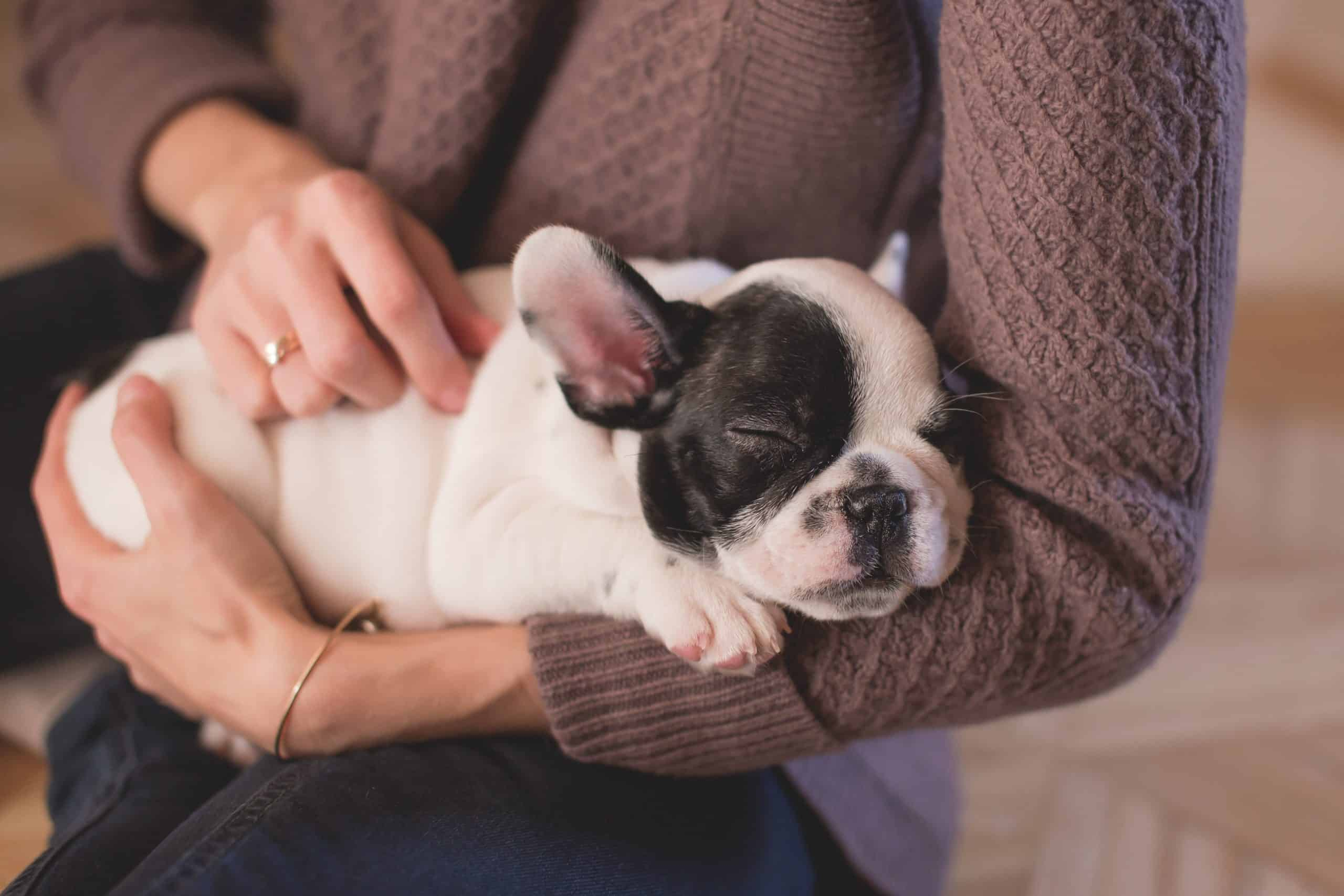 18 Low Maintenance Pet Breeds for Adults With 9 to 5 Office Jobs