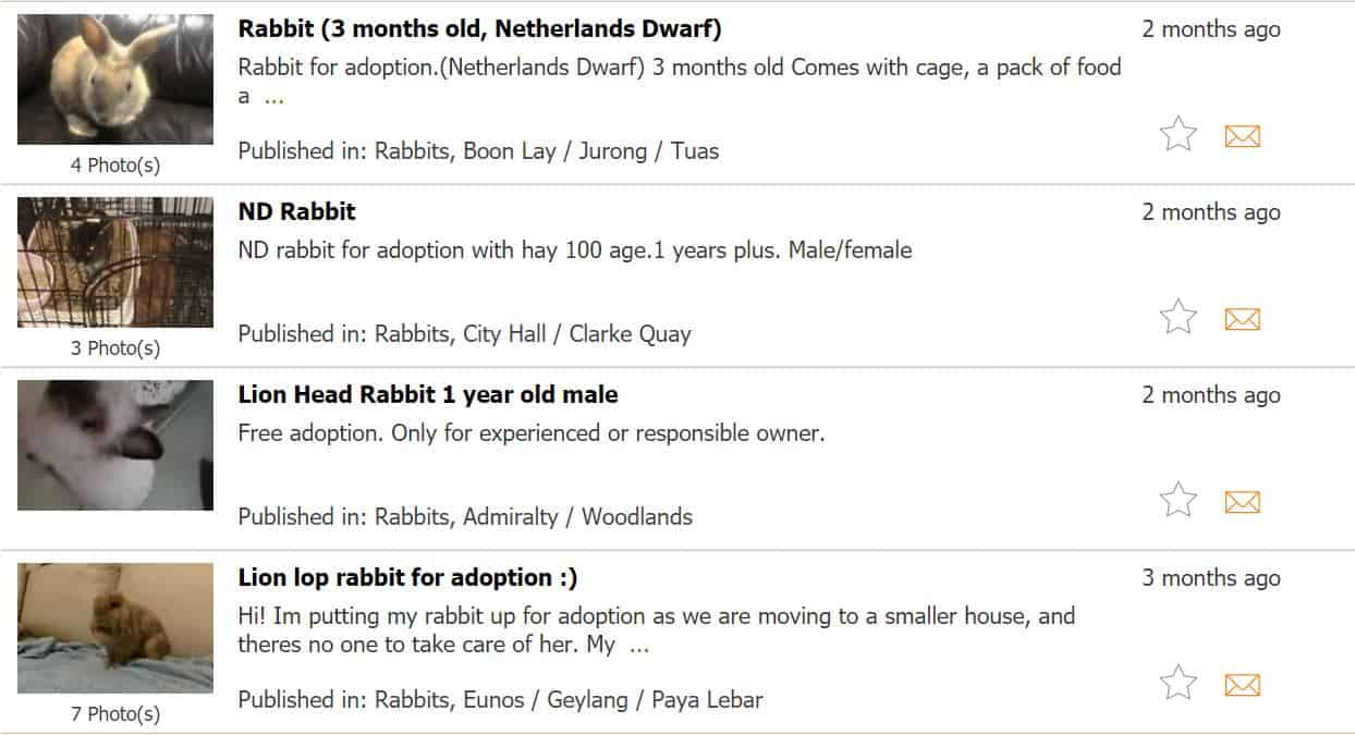 Gumtree forum to find rabbits for adoption in singapore
