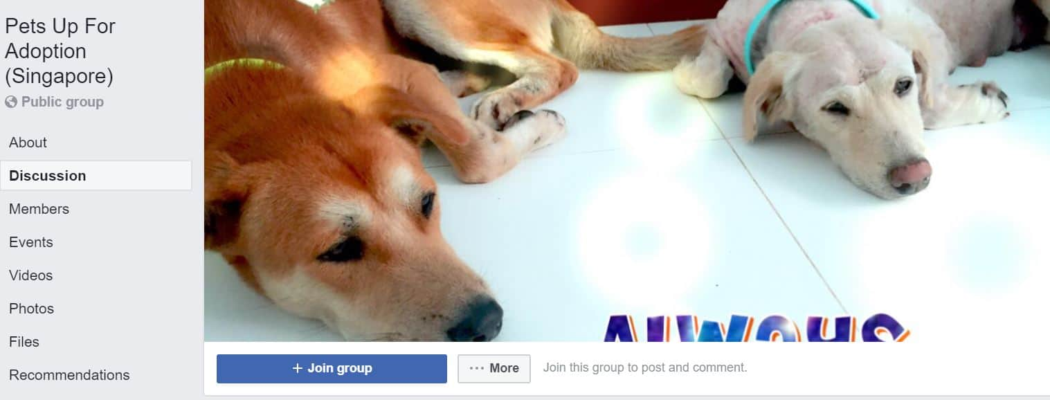 Pet adoption facebook groups in singapore