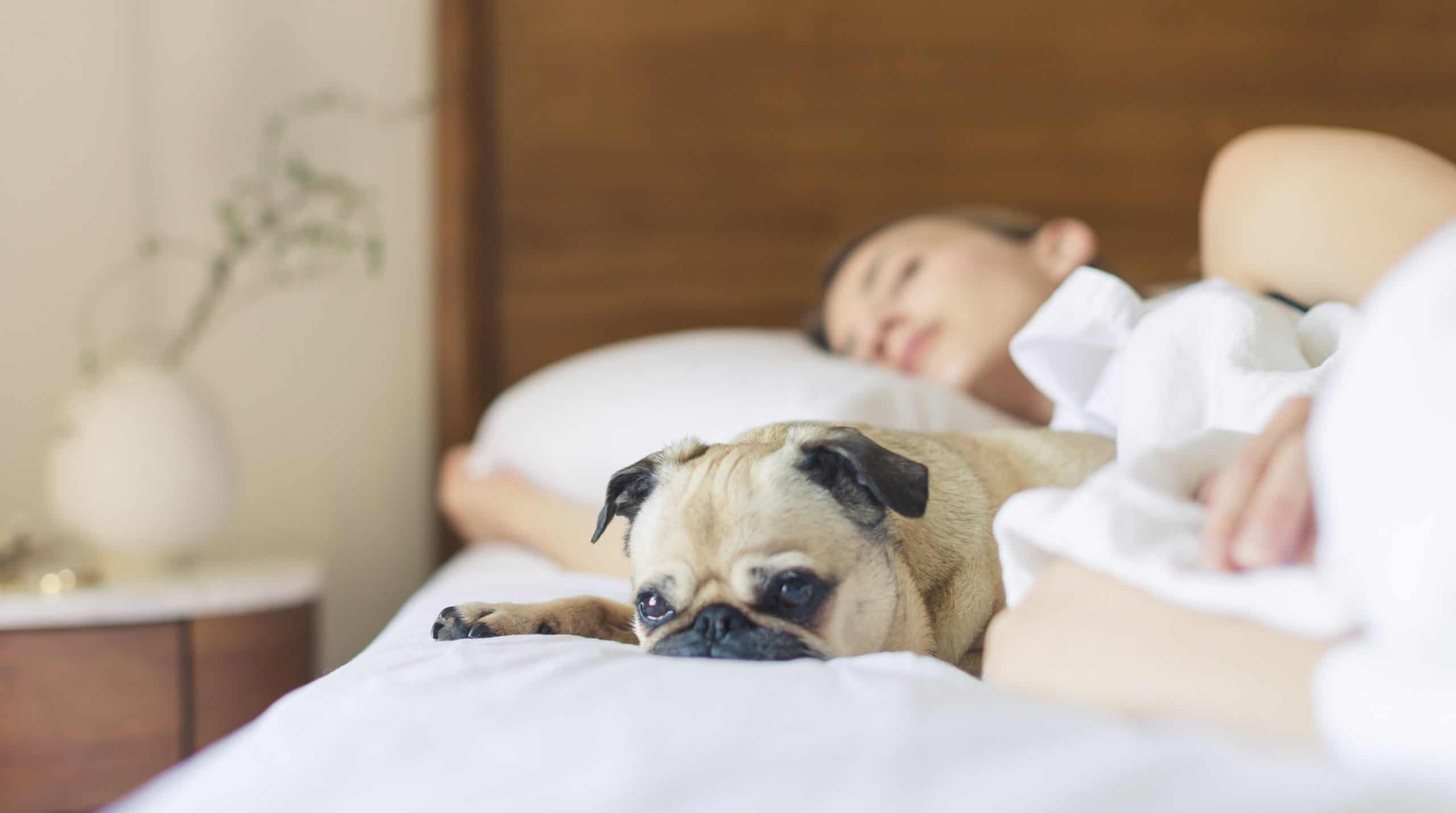 Dog Behaviourist Explains How to Help Your Dog Cope During COVID-19 Lockdown Measures