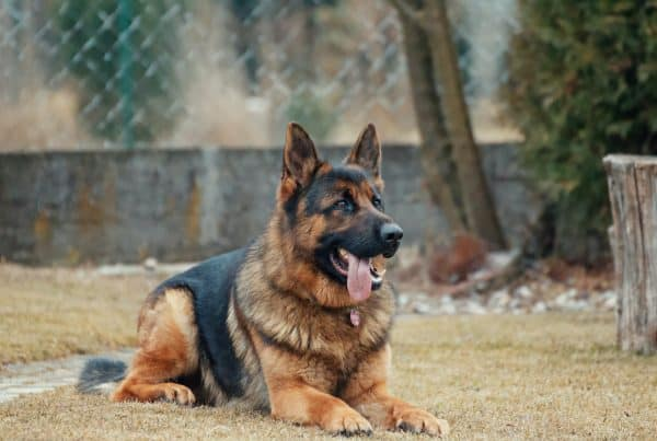 HDB Approved Dog Breeds under Project ADORE