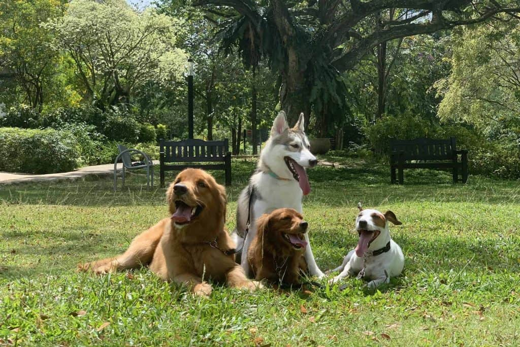Four dogs sitting on grass