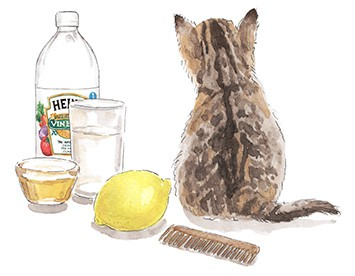 Home remedies for cat fleas