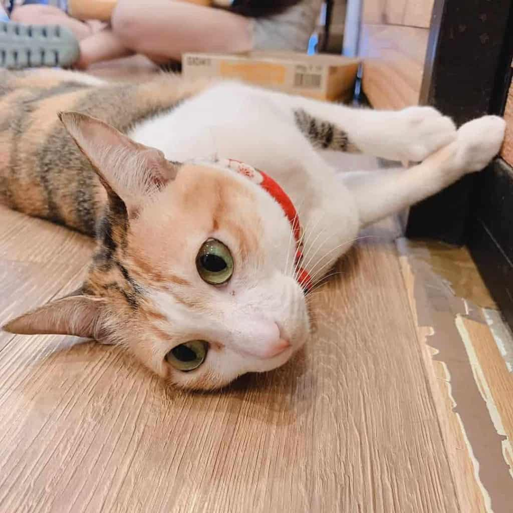 Cat lying down on a table