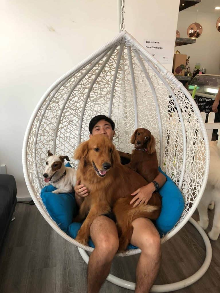 Darren sitting on a swing with some dogs